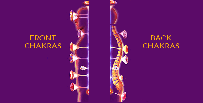 Image-of-the front-and-back-chakras