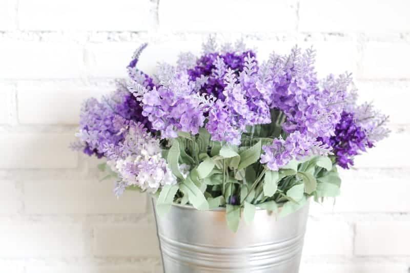 Lavender flowers in vase