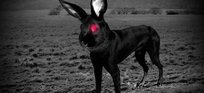 Mysterious-animal-sighting
